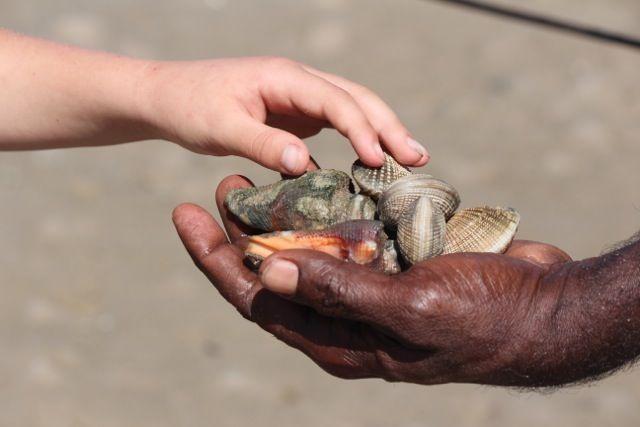 hand and shells